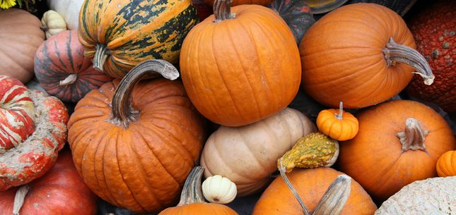 All About Pumpkins Featured