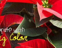 Decorate-w-Living-Color_650x305