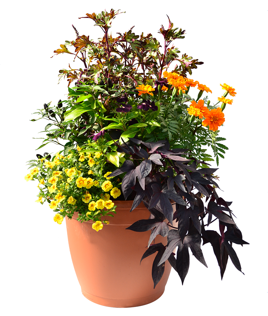 Annuals for fall homestead gardens inc heat tolerant plants flowering and fruiting now will take you through fall in style designed by our container specialist lennie at our davidsonville izmirmasajfo Image collections