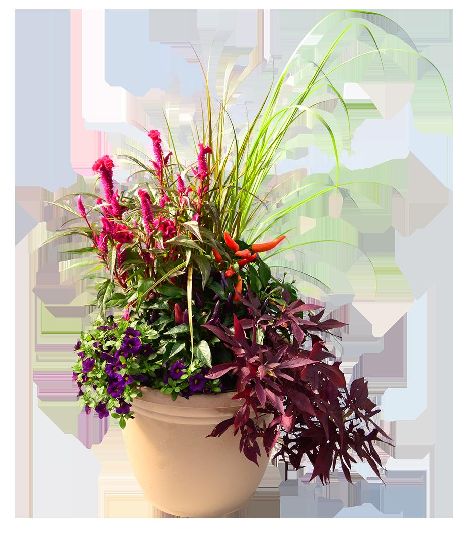 annuals tropicals herbs vegetables davidsonville annapolis maryland homestead gardens inc. Black Bedroom Furniture Sets. Home Design Ideas