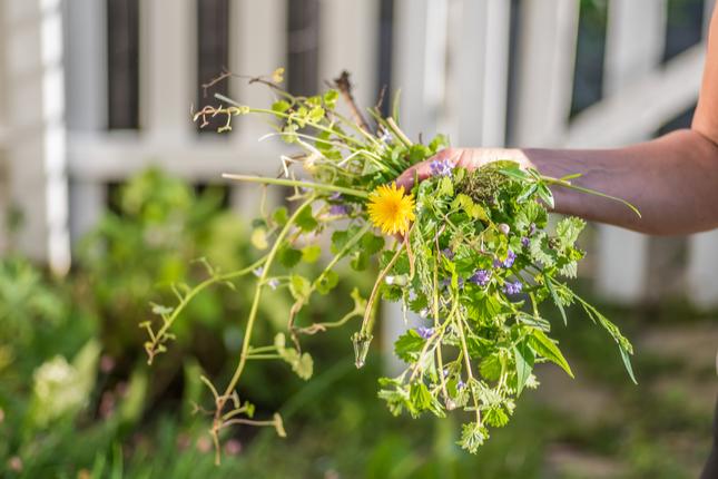 Fall Planting Preparation