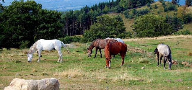 Horses2_650x305