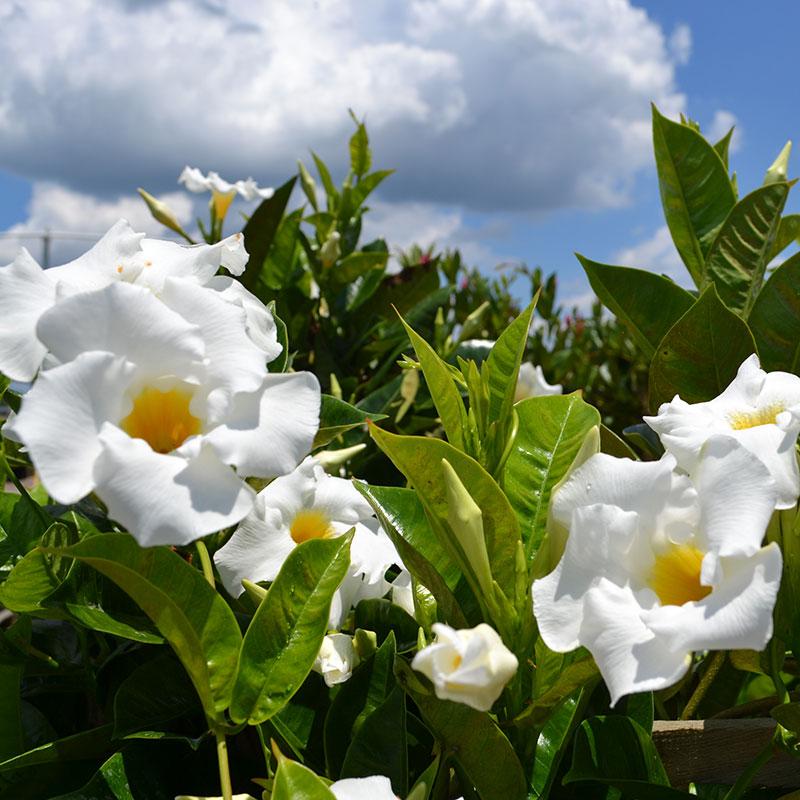 Homestead Gardens Weekly Sales | Homestead Gardens, Inc.
