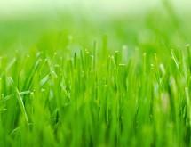 Spring_Lawn