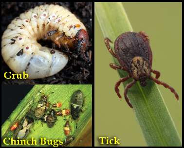 Ticks_Grubs
