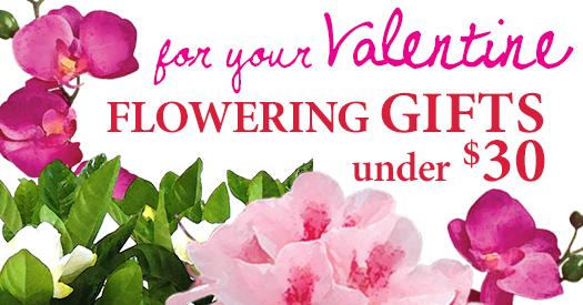 Valentine-Gifts-under-30_525x275