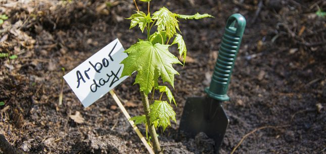 arbor day facts
