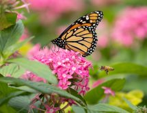 attract-pollinators-garden