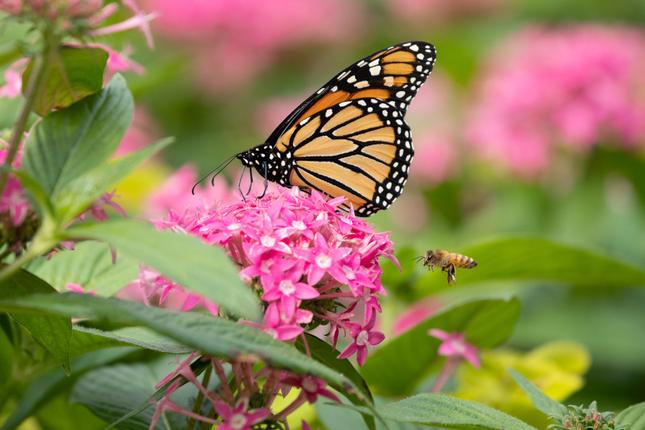 attract-pollinators-garden