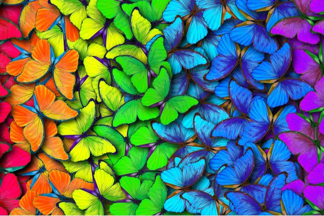 backyard butterfly oasis