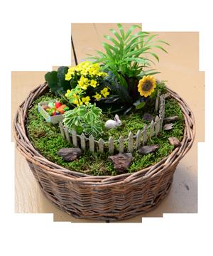 Good Miniature Flowering Plants   Homestead Gardens, Inc. | Homestead Gardens,  Inc.