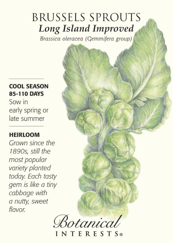 botanical-interest-brussel-sprouts