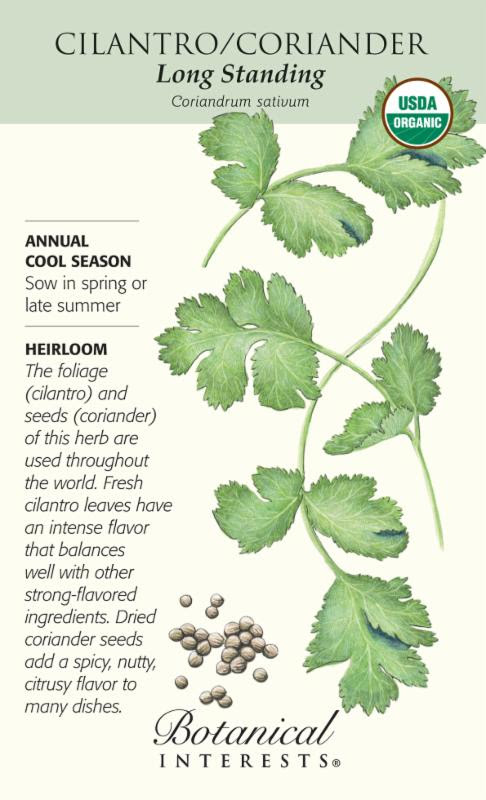 botanical-interest-cilantro