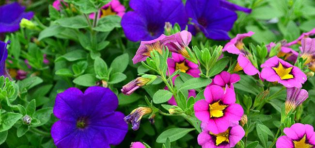 3 stunning spring plants to brighten up your garden - Homestead ...