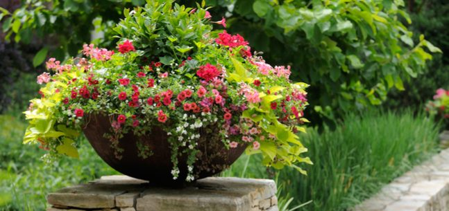 container gardening tips]