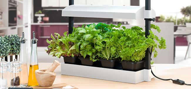 Grow Your Own Countertop Garden Homestead Gardens Inc