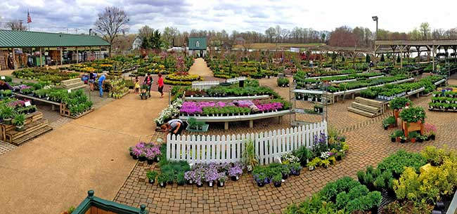 Garden Center Davidsonville Maryland Homestead Gardens Inc