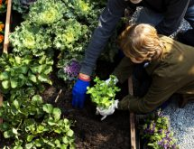 edible garden guru