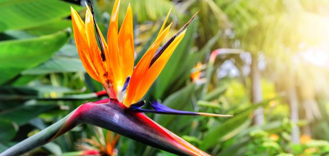 exotic flower varieties