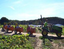 Barnyard Parties | Homestead Gardens, Inc