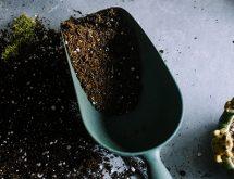 Shovel ready for planting