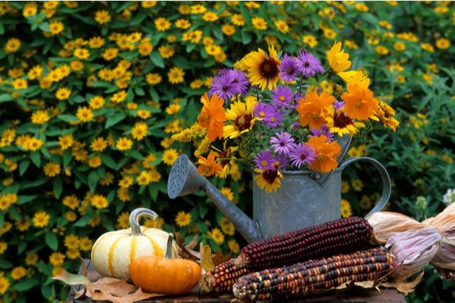 fall-season-planting-spring
