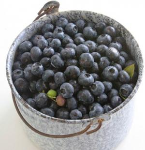fall_creek_bucket_of_berries__page_image