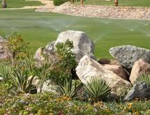 garden-watering-650-305