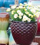 glazed-ceramic-2