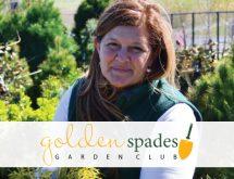 Homestead Gardens - Golden Spades