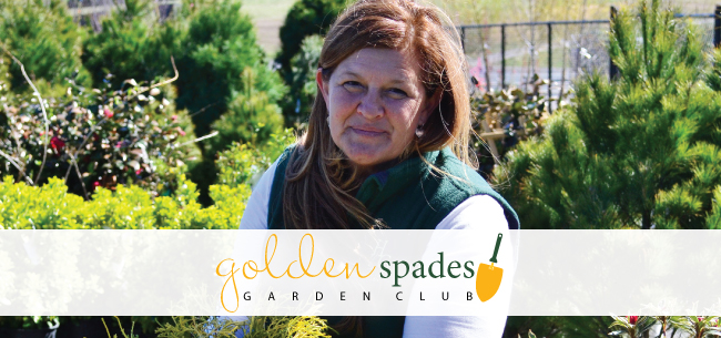 Homestead Gardens - Golden Spades