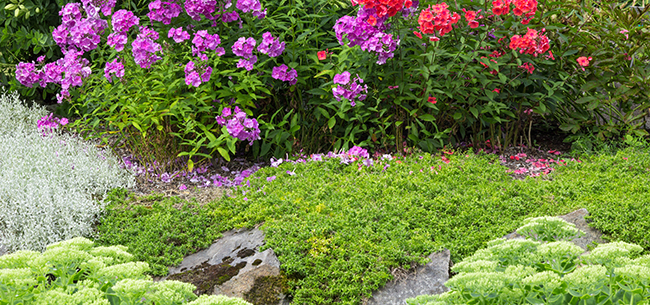 Great ground-cover choices for your landscape needs - Homestead ...