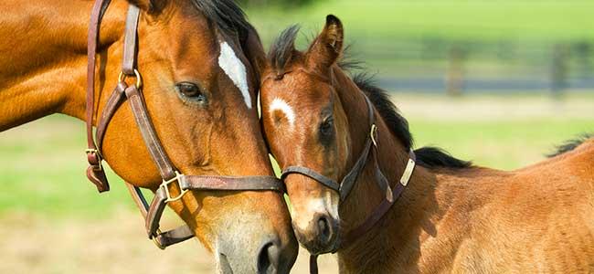 colt horse ile ilgili görsel sonucu