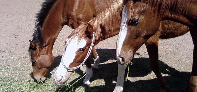 horses-650x305