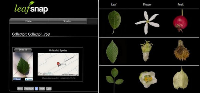 Leaf Snap
