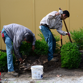 let-us-planting-350x350