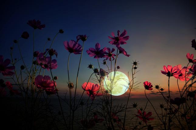 moon garden trend