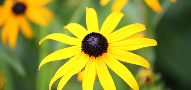native Maryland plants