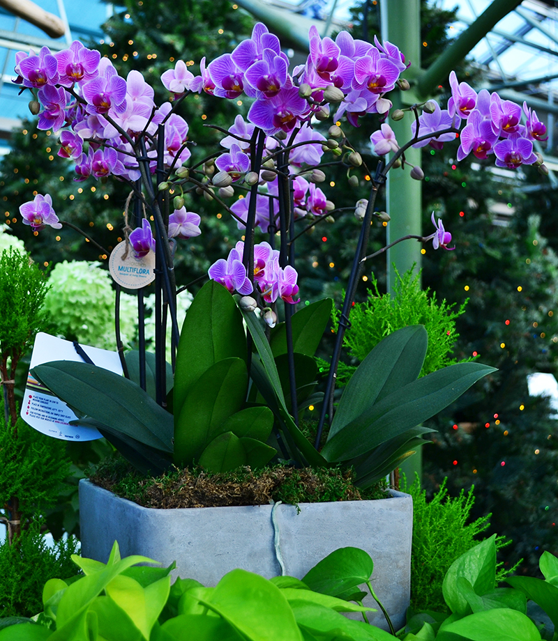 Homestead Gardens Landscaping: Holiday Plants - Homestead Gardens, Inc.