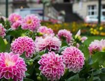 perennial-garden