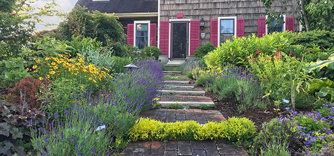 Top Perennials For Mid Atlantic Gardens