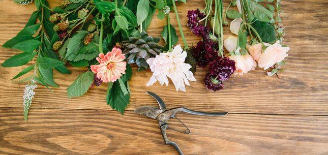 plant cut flower garden