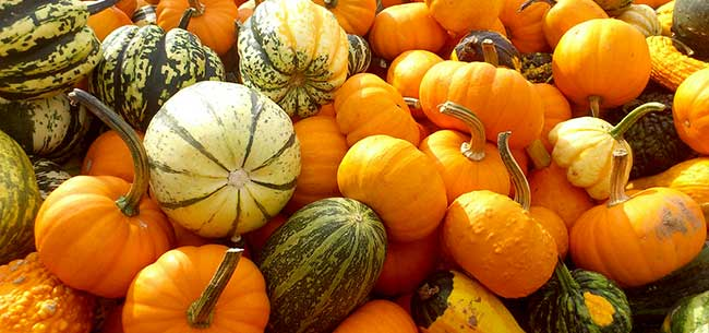 Tips For Buying Pumpkins   Homestead Gardens, Inc. | Homestead Gardens, Inc.
