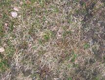 short-dry-grass-650x305