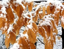 trees-nature-frost