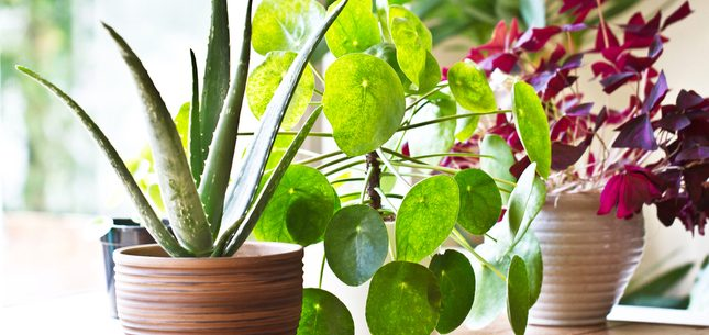 winter houseplant care